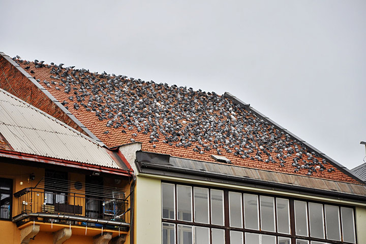 A2B Pest Control are able to install spikes to deter birds from roofs in Stamford Hill.