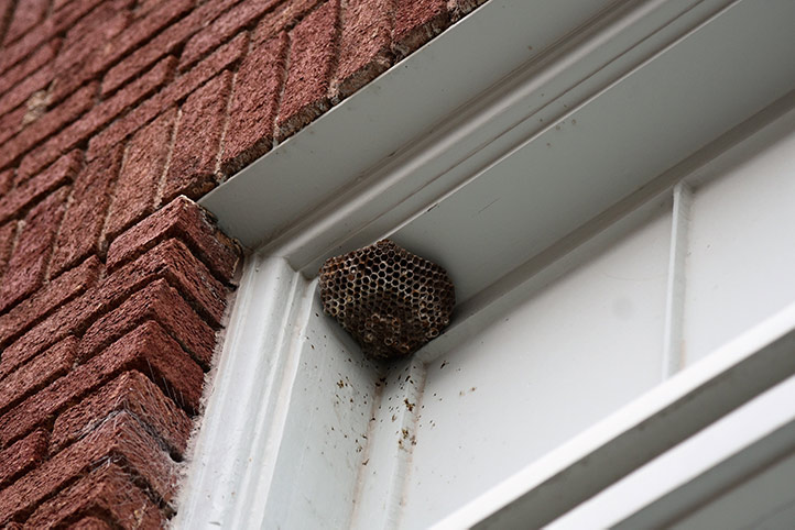 We provide a wasp nest removal service for domestic and commercial properties in Stamford Hill.